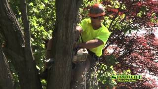preview picture of video 'Tree Removal West Chester PA - 610-364-5116 - Strobert Tree Services Inc'