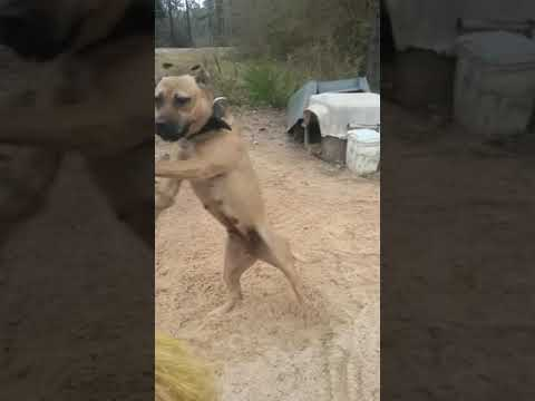 Redboy/jocko/jeep все видео по тэгу на igrovoetv online