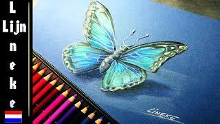 Vlinder Tekenen Voor Beginners