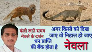 Snake Vs Mongoose l Saap Aur Nevla Ki Ladai l Animal 4K Ultra HD
