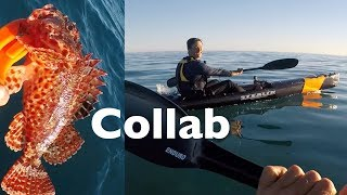 Catch N Cook Scorpion Fish Urban Fishing Australia Collaboration Ft RoKKit Kit Kayak Fishing EP.371