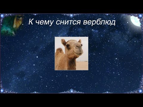 К чему снится Верблюд (Сонник)
