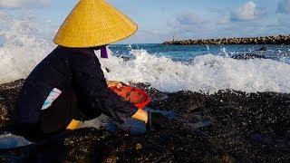 Hái Rong Biển - Nghề Mưu Sinh Nguy Hiểm ở Quảng Trị