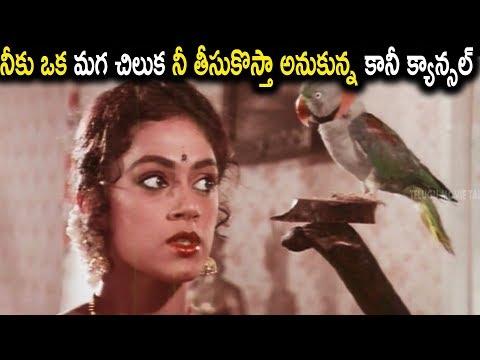 నీకు ఒక మగ చిలుక నీ తీసుకొస్తా అనుకున్న కానీ క్యాన్సల్ || #BalaKrishna,#Nirosha,#Shobhana,#SaradaTMT