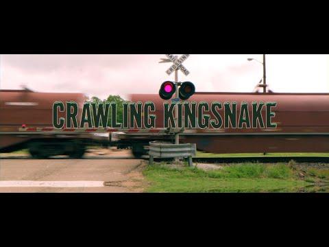 Crawling Kingsnake