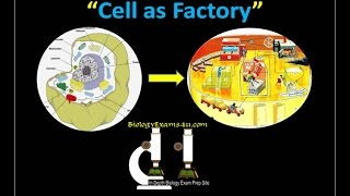 Cell Analogy: Cell as a Factory