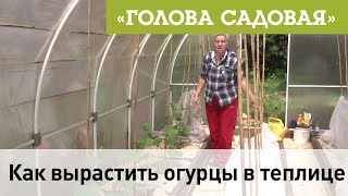 Голова садовая - Как вырастить огурцы в теплице
