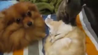 Наши любимцы - Our pets