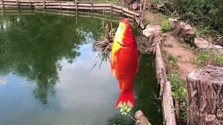 Купавенский пруд рыбалка