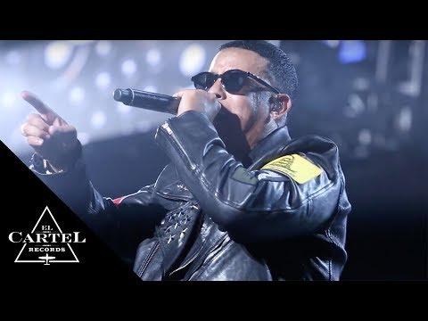 Kingdom (Live)