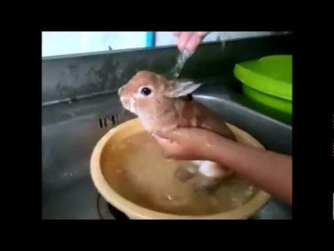 วิธีการที่จะวิเคราะห์อุจจาระไข่ของหนอน