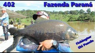 Tambacus da Fazenda Paraná - Fishingtur na Tv 402