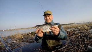 Ловля плотвы в мае на рыбинском водохранилище