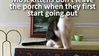 Q19 - If I Let My Cat Outside, Will She Come Back Home?
