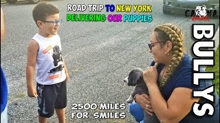 He Just Got His First American Bully Puppy - (His Reactions was Priceless)  NY Road Trip   Part 1