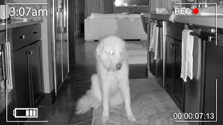 WHAT OUR GUARD DOG DOES ALONE AT NIGHT (Night Vision Spy Cam Footage)