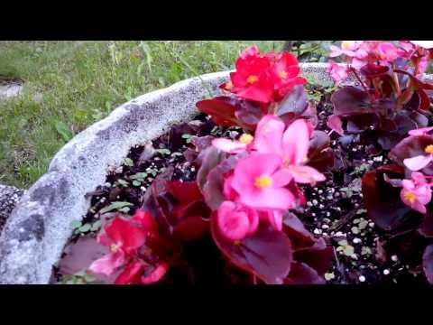 Wiko Rainbow: Test video HD 720p