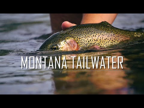 Montana Tailwater - MO Caddis Hatch