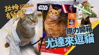 The Jedi Cat Training LAMUNCATS ☁