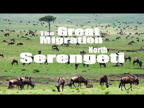 Safari en Tanzania  - Parque nacional Serengeti Parte 1 - Desde el norte al Corredor oeste