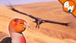 SAVED! Prehistoric Bird Escapes Extinction!