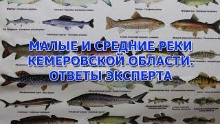 Клев рыбы в кемеровской области