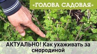 Садовая голова клубника
