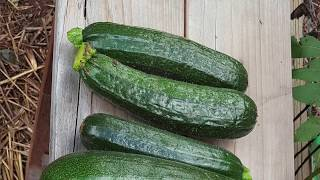 All About Squash - how to grow Zucchini, butternut and white scalloped
