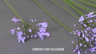 小慢插花 Ikebana:Agapanthus