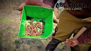 Прикормка диалоги о рыбалке красный червь