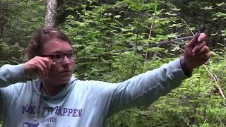 Les sapinières d'altitude du Livradois-Forez