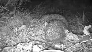 Wildlife Trail Camera - 7.7.2019