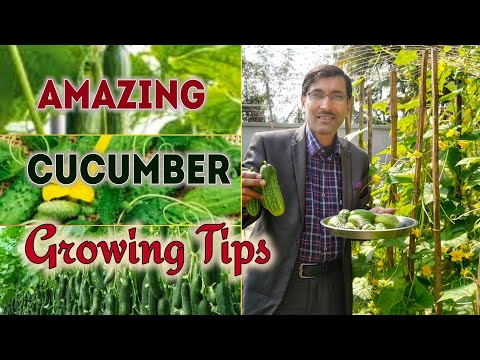 , title : 'How to grow Cucumbers ?