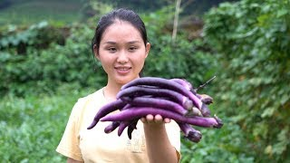 Fresh eggplant in the farmland, try to cook like this, full of delicious umami