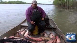 Commercial And Recreational Fisheries At Risk By Asian Carp