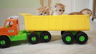 Test Drive From Kittens 🐈🚗 Too Cute Compilation