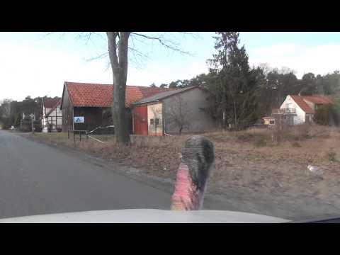 Buchholz - Aller 3.3.2013