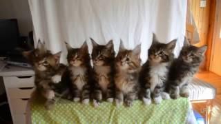 Кот | супер кот | Приколы про Котов | ТОП Подборка
