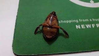 супер мощный жук