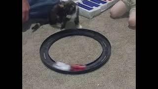 Забавный котик ласкает взгляд | Приколы до слез - Collab #133