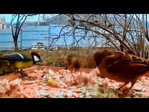 Крымская зима, кормим птиц. Кто прилетел на кормушку