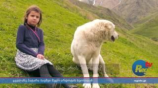 ქეთო დაიაური – ყველაზე პატარა ბავშვი მუცო-არდოტის ხეობაში