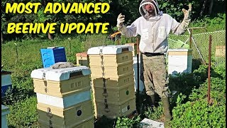 Most Advanced Beehive - Update 2