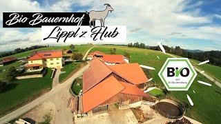 Mit der Drohne durch den Ziegenstall | Bio Bauernhof | Cinematic Fpv