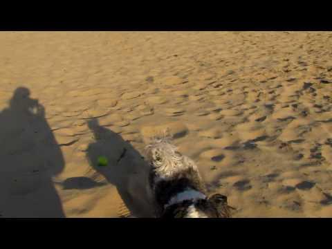 Bo in het zand van de bossen van Sint Anthonis