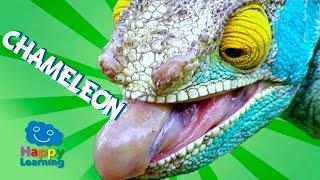 Videos for Children   Chameleon for Kids (Educational Video)