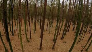 Between trees. 4K FPV