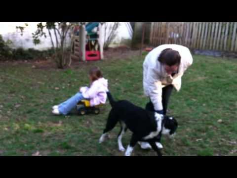 Terrific Dogs Presents: Training Sample- Riley in Backyard with Parents Long Version
