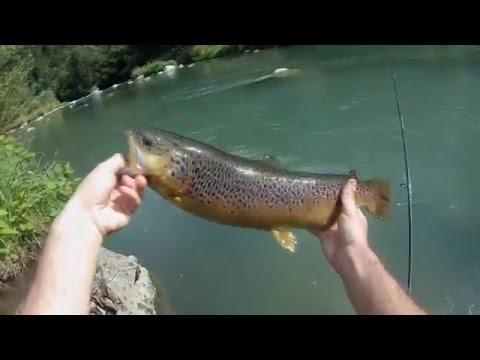 Scaricare da un torrente di gioco su pesca