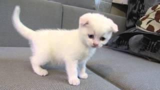 Милые котята- Пушистые НЯШКИ